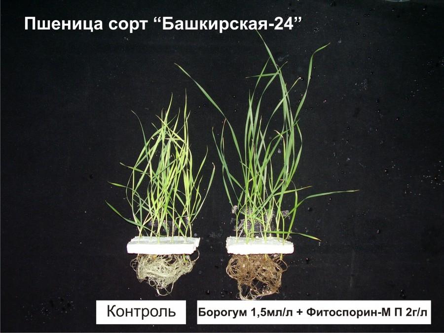 bashkirskaia-24.jpg